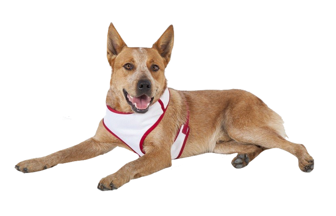 Harness red and white