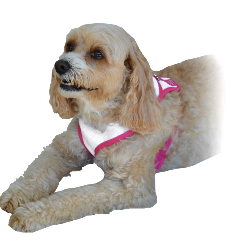 Ruby White Harness Pink